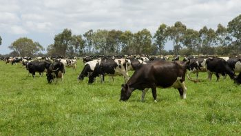 Permalink to: Pasture, Rangeland & Forage Insurance
